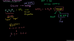 Cellular respiration : Introduction to C... Volume Science & Economics series by Sal Khan