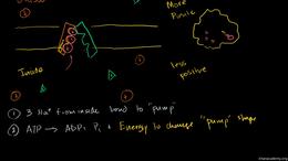 Human biology : Sodium Potassium Pump Volume Science & Economics series by Sal Khan
