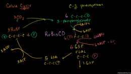 Photosynthesis : Photorespiration Volume Science & Economics series by Sal Khan