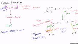Cellular respiration : Glycolysis Volume Science & Economics series by Sal Khan