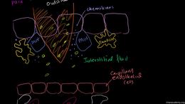Immunology : Inflammatory Response Volume Science & Economics series by Sal Khan