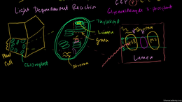Photosynthesis : Photosynthesis: Light R... Volume Science & Economics series by Sal Khan