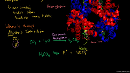 Human biology : Hemoglobin Volume Science & Economics series by Sal Khan