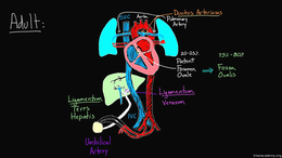 Fetal Circulation : Fetal Structures in ... Volume Science & Economics series by Rishi Desai