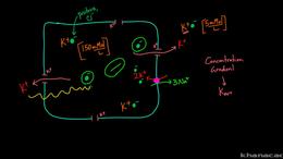 Heart Depolarization : Membrane Potentia... Volume Science & Economics series by Rishi Desai