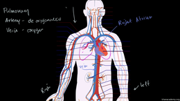 Human biology : Circulatory System and t... Volume Science & Economics series by Sal Khan
