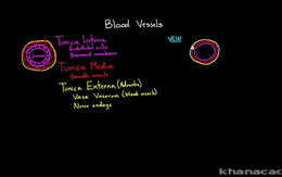 Blood Vessel Diseases : Layers of a bloo... Volume Science & Economics series by Rishi Desai