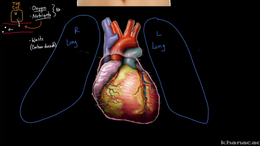 The Heart : Meet the heart! Volume Science & Economics series by Rishi Desai