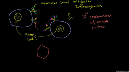 Immunology : B Lymphocytes (B cells) Volume Science & Economics series by Sal Khan
