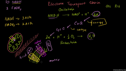 Cellular respiration : Electron Transpor... Volume Science & Economics series by Sal Khan