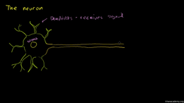 Human biology : Anatomy of a Neuron Volume Science & Economics series by Sal Khan