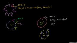 Immunology : Cytotoxic T Cells Volume Science & Economics series by Sal Khan