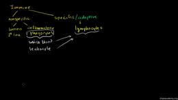 Immunology : Types of immune responses: ... Volume Science & Economics series by Sal Khan