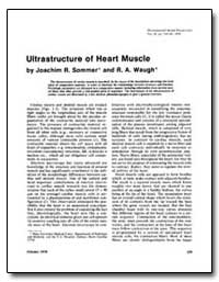 Ultrastructure of Heart Muscle by Sommer, Joachim R.