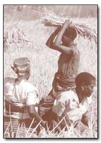 Africa Sub-Sahariana by Food and Agriculture Organization of the United Na...