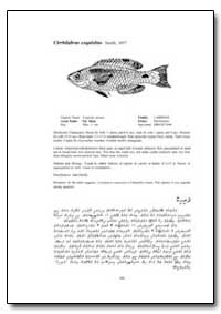 Cirrhilabrus Exquisitus Smith, 1957 by Food and Agriculture Organization of the United Na...