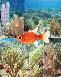 Biodiversity of Saba Bank : by Public Library of Science
