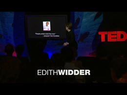 TEDtalks Mission Blue Voyage : Edith Wid... by Edith Widder