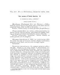 Botanical Gazette : 1889 ; Apr. No. 4 Vo... Volume Vol. 14 by Ruddat, M.