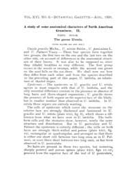 Botanical Gazette : 1891 ; Aug. No. 8 Vo... Volume Vol. 16 by Ruddat, M.