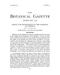 Botanical Gazette : 1916 ; Feb. No. 2 Vo... Volume Vol. 61 by Ruddat, M.