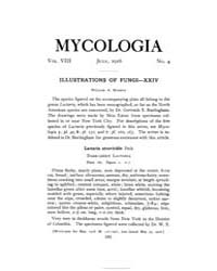 Mycologia : 1916 Jul. No. 4, Vol. 8 Volume Vol. 8 by