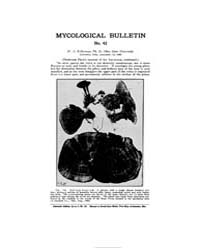 Mycological Bulletin : 1905 Sep. 15 No. ... Volume Vol. 3 by