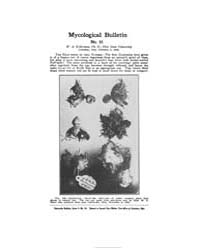 Mycological Bulletin : 1906 Feb. 1 No. 5... Volume Vol. 4 by