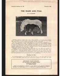 The Mare and Foal, Document E128 by R. S. H Udson