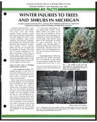 Winter Injuries to Trees and Shrubs in M... by Franklin Laemmlen
