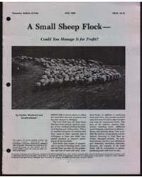 A Small Sheep Flock, Document E1404-80 by Gordon Wuethrich