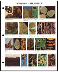 Soybean Diseases Ii, Document E1419-80 by Michigan State University