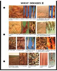 Wheat Diseases Ii, Document E1421-80 by Michigan State University