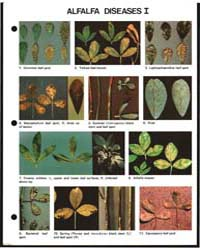 Alfalfa Diseases I, Document E1422-80 by Michigan State University