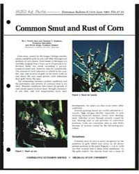 Common Smut and Rust of Corn, Document E... by L. Patrick Hart