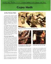 Gypsy Moth, Document E1678-1984 by Frank J. Saplo