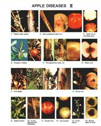 Apple Diseases Ii, 1689-1982, Document E... by Michigan State University