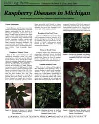 Raspberry Diseaese in Michigan, Document... by Donald Ramsdell
