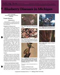 Blueberry Diseaese in Michigan, Document... by D. C. Ramsdell