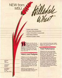 Hillsdale Wheat, Document E1787-1984 by Michigan State University