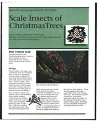 Scale Insects of Christmas Trees, Docume... by Bryan D. Bishop
