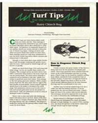 Turf Tips for the Homeowner Hairy Chinch... by David Smitley