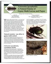 Calosoma Sycophanta, a Natural Enemy of ... by Molly Mott