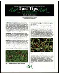 Turf-tips Black Cutworms, Document E2623 by Michigan State University