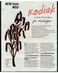 New Form Msu Kodiak a New Pinto Bean for... by Michigan State University