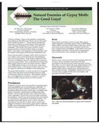 Natural Enemies of Gypsy Moth, the Good ... by Deborah G. McCullough