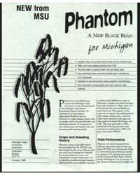 Phantom, a New Black Bean, Document E271... by Michigan State University