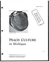 Peach Culture in Michigan, Bulletin 509,... by Michigan State University