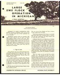 Large Ewe Flock in Michigan, Bulletin 51... by Michigan State University