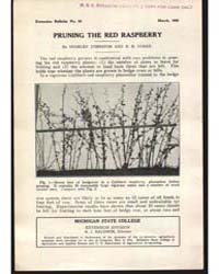 Pruning the Red Raspberry, Document E63 by Johnston, Stanley